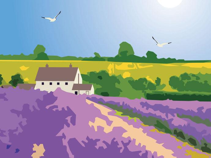 Cotswolds Lavender illustration close up